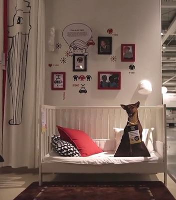 IKEA dogs