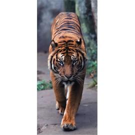 Fototapet Tigru bengalez