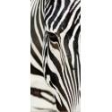 Fototapet animale - Zebra