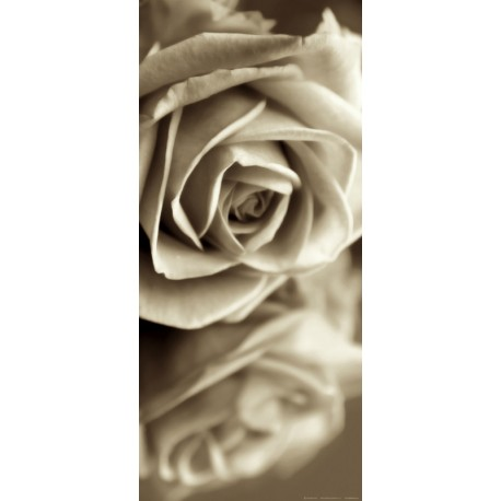 Fototapet Trandafiri Vintage