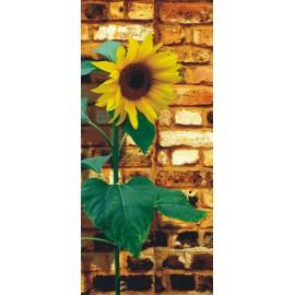 Fototapet usi Floarea soarelui