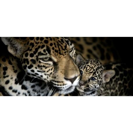 Fototapet animale - Pui de leopard