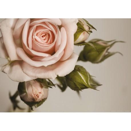 Fototapet Trandafir Vintage