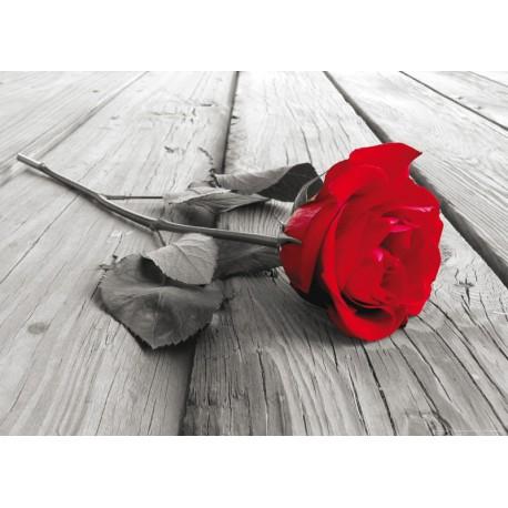 Fototapet floral Trandafir rosu