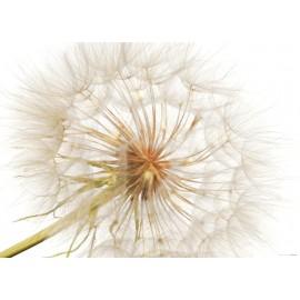 Fototapet floral Papadie