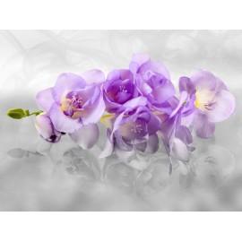 Fototapet Orhidee mov
