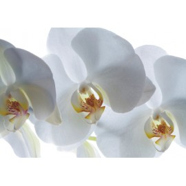 Fototapet living Orhidee albe