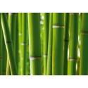 Fototapet Bambus