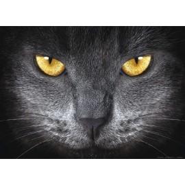 Fototapet Pisica neagra