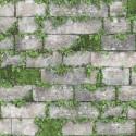 Tapet Piatra gri cu plante