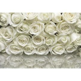 Fototapet floral Trandafiri albi
