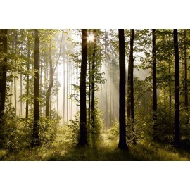 Fototapet Morning Forest