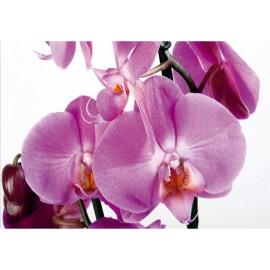 Fototapet Orhidee Violet