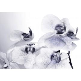 Fototapet Orhidee alb-negru