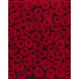 Fototapet Trandafiri rosii
