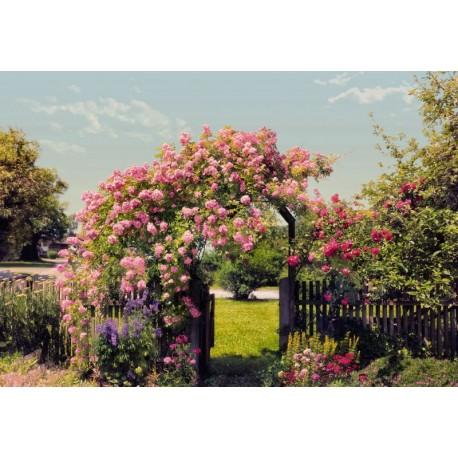 Fototapet Bolta de trandafiri