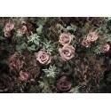 Fototapet Velvet Roses