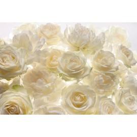 Decorare cu Fototapet Trandafiri albi