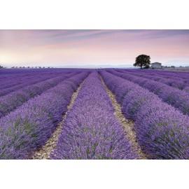 Amenajare cu Fototapet Lavanda Provence