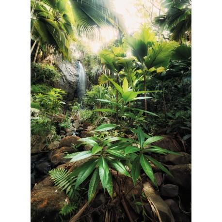 Fototapet Peisaj jungla