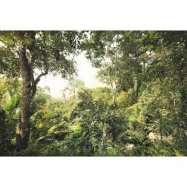 Fototapet Padure tropicala