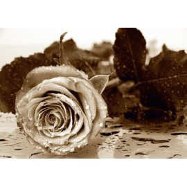 Fototapet Trandafir Sepia