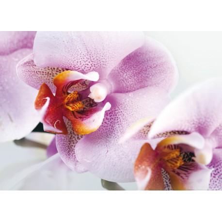 Fototapet floral Orhidee alb-violet