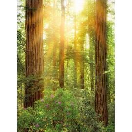 Fototapet Padure de Sequoia