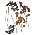 Stickere perete Flori clasice