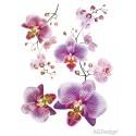 Decor perete Orhidee