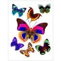 Decor perete Fluturi multicolori