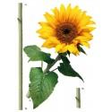 Decor perete Floarea soarelui