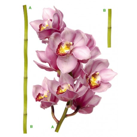 Decor perete Orhidee violet