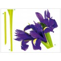 Decor perete Floare de Iris violet