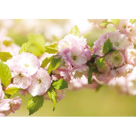 Fototapet Flori roz