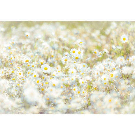 Fototapet floral Margarete