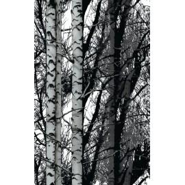 Autocolant Mesteceni alb-negru