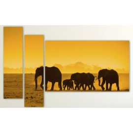 Tablouri canvas 3 piese cu elefanti