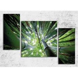 Tablouri canvas 3 piese Padure bambus