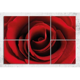 Tablouri canvas Trandafir rosu