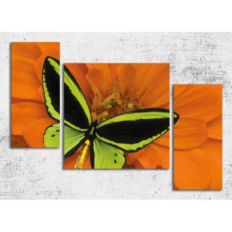 Tablouri canvas 3 piese Fluture exotic