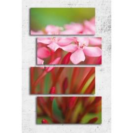 Tablouri canvas Flori roz