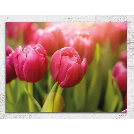 Tablou flori - Lalele roz