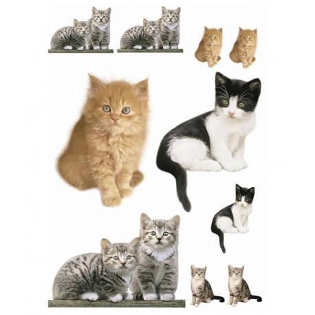 Stickere Pisici in marime naturala